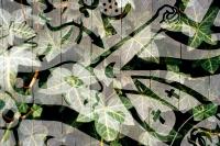 David-Goldberg-Horticulture-06