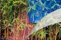 David-Goldberg-Horticulture-14